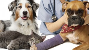 Homeopathy-For-People-Pets