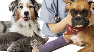 Homeopathy For People and Pets